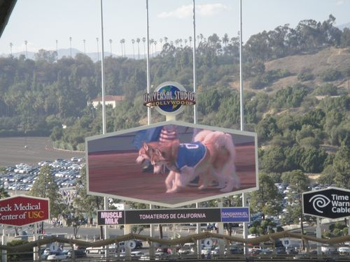 2013 Dodger Blog Bark in  the Park 5 twin doggies